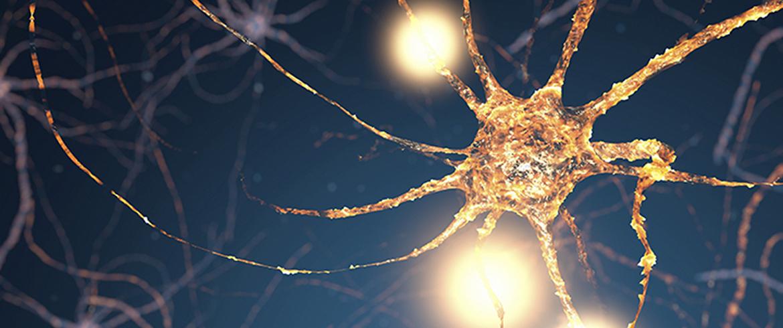 6 fatti interessanti sul sistema endocannabinoide - artrite - cancro - sistema immunitario