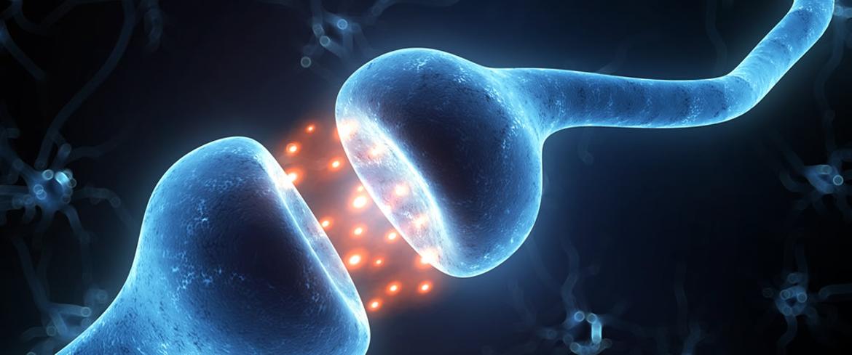 6 fatti interessanti sul sistema endocannabinoide