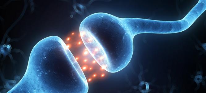 6 zanimivih dejstev o endokanabinoidnem sistemu