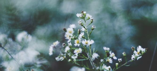 3 zelišča za atopijski dermatitis